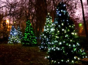 Celebration of Trees @ Carthage, IL