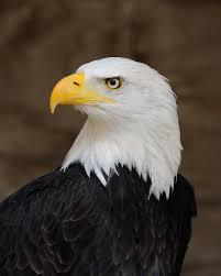 Eagle Days!- Online